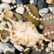 Royalty-Free Stock Photo: Beautiful exotic shell and stones, pearls