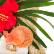 Exotic shell and red flower with two worn golden rings — Photo