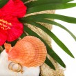 Exotic shell and red flower with two worn golden rings — Stock Photo