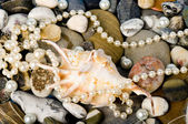 Beautiful exotic shell and stones, pearls — Stock Photo