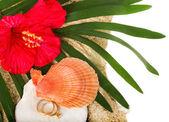Shell exótica e flor vermelha com dois anéis de ouro usado — Fotografia Stock