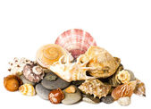 Beautiful exotic shell and stones — Stock Photo