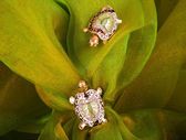 Beautiful golden tortoises on green background — Stock Photo
