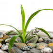 Stones and green plant — Stock Photo