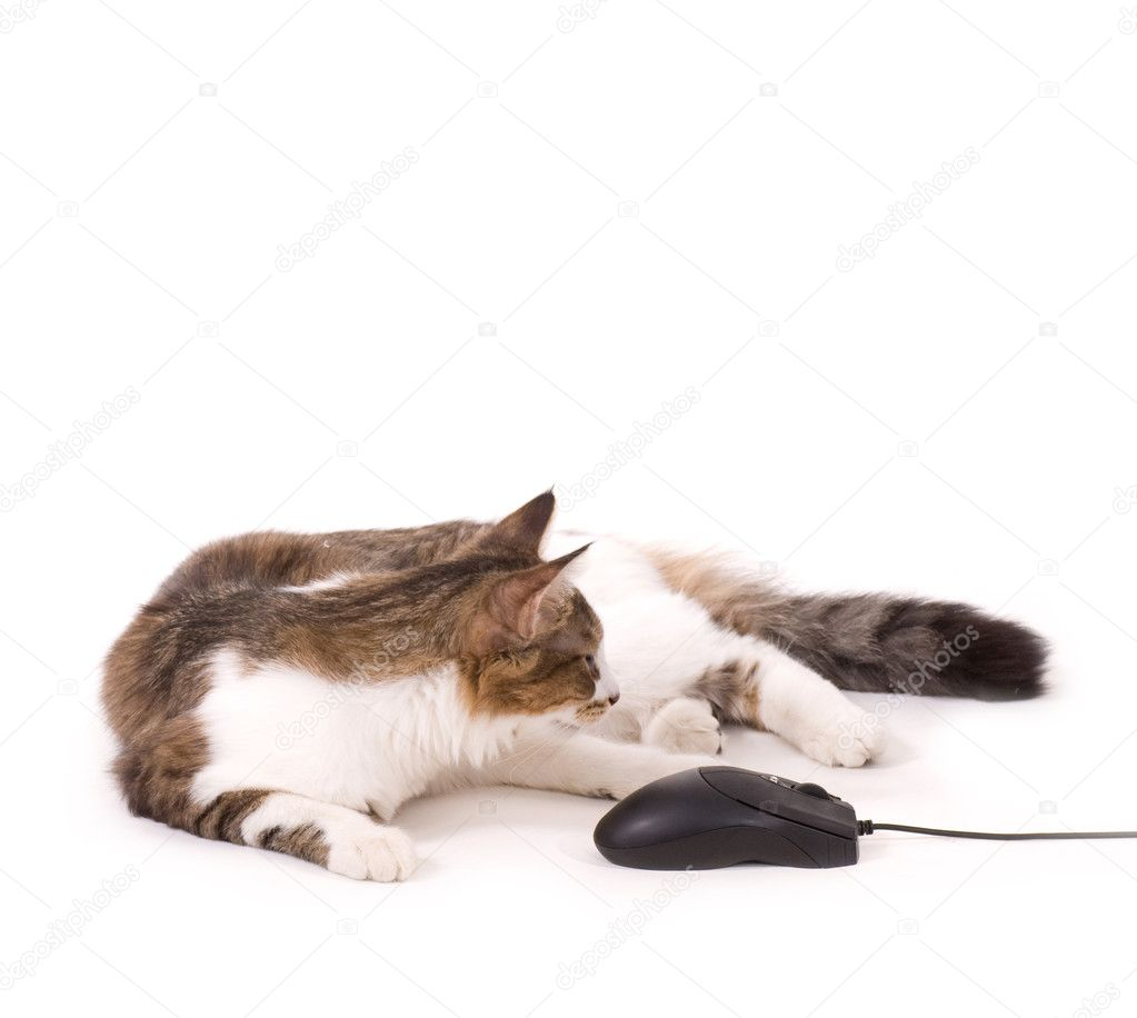 Beautiful cat with computer mouse on white background — Stock Photo #9648080