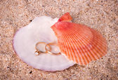 Beautiful two wedding golden rings on shell — Stock Photo