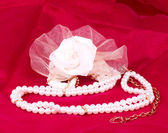 The beautiful bridal rose on red background — Photo