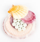 Beautiful exotic shell and pearls on white background. — Stock Photo