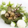 Nest with quail eggs and spring flowers — Photo