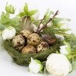 Nest with quail eggs and spring flowers — Stockfoto