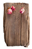 Torr rosa rosor på gammalt trä virke isolerad på vit bakgrund — Stockfoto