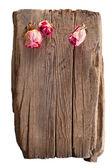 Trockene rosen am alten holz holz isoliert auf weißem hintergrund — Stockfoto
