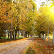 Stock Photo: Autumn lane