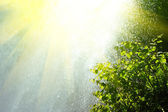 Rain and sun — Stock Photo