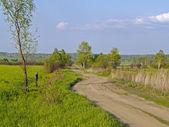 Paesaggio estivo con una strada di campagna — Foto Stock