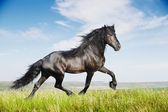 Beautiful black horse running trot — Stock Photo
