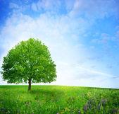 Tree in green meadow — Stock Photo