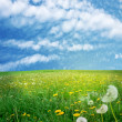 Field of dandelions — Stock Photo #9243613