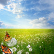 Beautiful landscape with colorful butterflies — Stock Photo