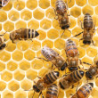 Honey cells and working bees — Stock Photo