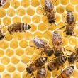 Honey cells and working bees — Stock Photo #9244876