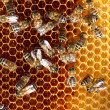 Stock Photo: Honey cells and working bees