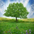 Oak tree on the flower field - Stock Photo