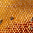 Honey comb and a bee working — Foto de stock #9249663