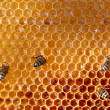 Honey comb and a bee working — 图库照片
