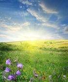 Flower field — Stock Photo