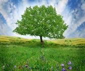 Oak tree on the flower field — Stock Photo