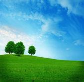 Trois arbres sur le domaine en vert — Photo