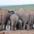 Stockfoto: AfricElephant