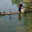 Chinese cormorant fisherman - Foto Stock