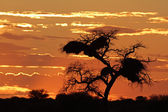 African sunset with silhouetted tree — Stock Photo