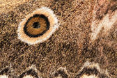 Wing of a moth — Stock Photo