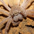 Spider portrait - Stock Photo