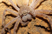 Spider portrait — Stock Photo