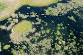 Coastal wetland — Stock Photo