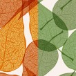 Royalty-Free Stock Imagen vectorial: Vector background with autumn leaves