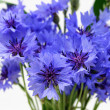 Cornflower — Stock Photo #9653696
