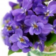 Violet bouquet — Stock Photo