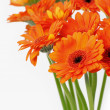 Stock Photo: Orange gerbera daisies