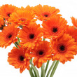 Orange gerbera daisies — Stock Photo #9656988