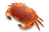 Prepared crab — Foto Stock