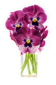 Pansy bouquet — Stock Photo