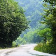 Country side road in green forest - Stock Photo