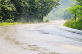 Country side road in green forest — Stock Photo