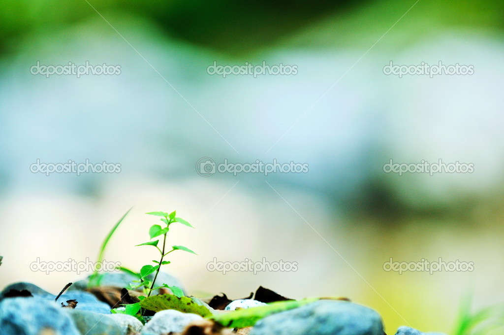New growth concept with young  green leaf tree in nature background — Stock Photo #10075682