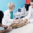 Veterinarian and assistant in a small animal clinic - Stock Photo